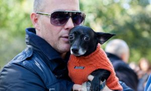 6 Halloween Safety Tips for Pets