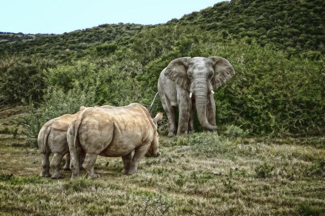 Two biggest land mammals on Earth. (Steve Slater)