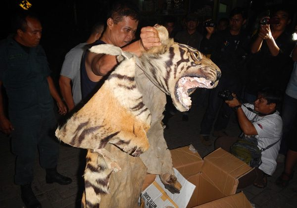 Confiscated tiger parts and suspects. Photo by the WCS Wildlife Crimes Unit.