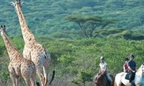 The Top 3 Horse Safaris in South Africa