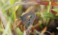 246 Species of Butterflies In India Reserve