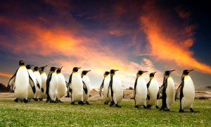 Fun and Free Things to Do in the Falkland Islands