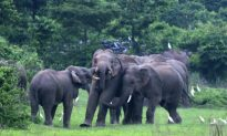 Tech Saving Indian Elephants on the Rails