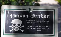 Meet Five of the UK's Most Poisonous Plants