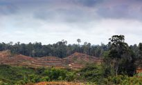 Indonesia Ministeries Unite to Save Forest?