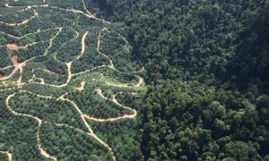 Locals Pay the Price for Palm Oil