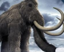 Woolly Mammoth Brain Found—Best Specimen in History