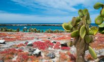 Things to See in the Galapagos Islands