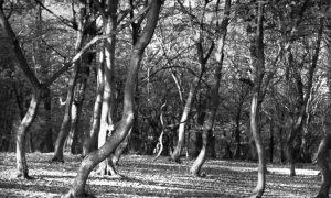 Transylvania's Haunted Forest, Known as Romania's 'Bermuda Triangle': Hoia Baciu