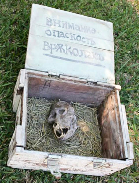 The werewolf-like skull was found in a box that was chained shut. (Filip Ganev)