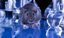 Will US Be Able to Follow Europe in Animal Testing Ban?