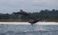 Gabon Reserves 23% of Its Coastal Waters
