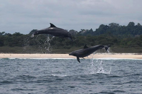 A pair of bottlenose dolphins frolic in the waters of Mayumba National Park, previously Gabon's only national park dedicated to the protection of marine species. Photo credit: Peadar Brehony / WCS -