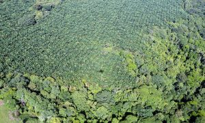 UN to Promote RSPO-certified Palm Oil