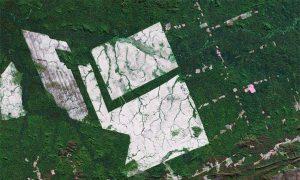 Brazilian Deforestation Rises