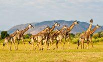 5 Great Reasons to Visit Zambia