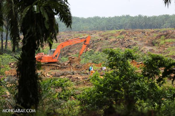 Excavator preparing to replant an oil palm plantation in Sumatra.
