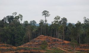 Palm Oil Giant Suspends Supplier