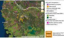 Ranking Palm Oil Company Sustainability