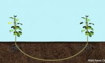 Plants Communicate Through Their Own Underground Network (Video)