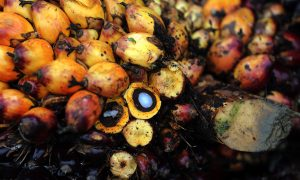 IKEA Commits to Zero Deforestation Palm Oil