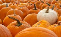 Pumpkin, Spice & Everything Nice