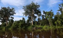 Indonesia Imposes Moratorium on Logging