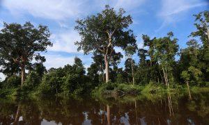 Indonesia Imposes Moratorium on Logging