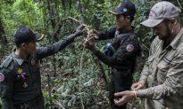 Elephant Pit Traps Still a Danger