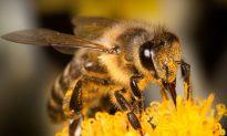 Bee Brain Hints at How We Make Memories