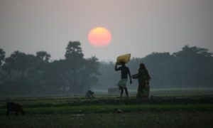 Failed GMO Promises Have Caused Nearly 300,000 Suicides in India Alone