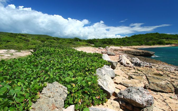 Caribbean coastline at Guanica via Shutterstock*