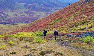 The Goldensides Hike in Tombstone Territorial Park, Yukon