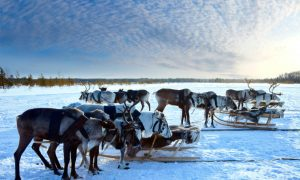 For the Thrills — Getting the Adrenaline Pumping in Lapland