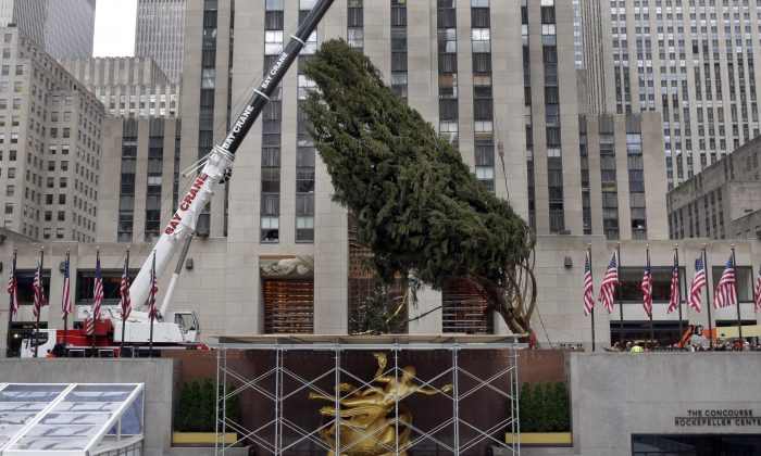 The 2014 Rockefeller Center Christmas Tree is raised by crane on Rockefeller Plaza, in New York, in this, Nov. 7, 2014 file photo. On Wednesday evening, Dec. 3, 2014 the air will reverberate with the voices of Lady Gaga, Tony Bennett, Mariah Carey, Cyndi Lauper and other music stars for the nationwide live broadcast of the lighting ceremony. Since the Great Depression, the Rockefeller Center tree has represented Christmas in New York City. (AP Photo/Richard Drew, File)