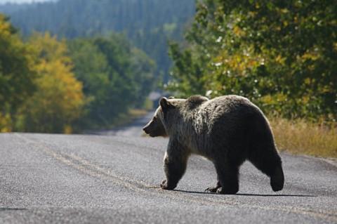 Sun road in Glacier National Park (Sutterstock*)