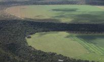 Indigenous Amazon Forest Stores Carbon