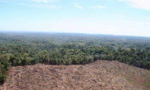 Deforestation Jumps in Peru
