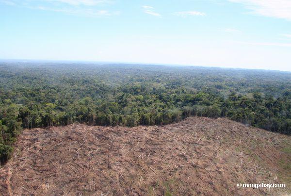 Deforestation in Madre de Dios in 2005. Photo by Rhett Butler