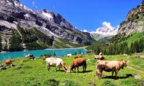 The Best Switzerland Attractions to See on Your Holiday