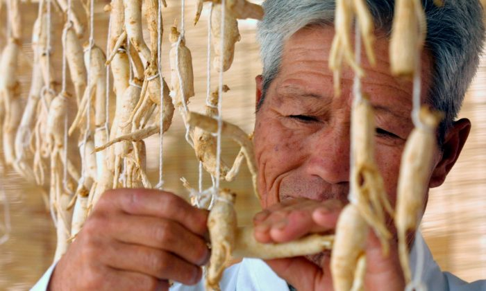 A South Korean man trims ginseng. (Photo by Chung Sung-Jun/Getty Images)