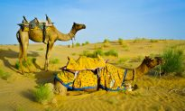 Rajasthan – 20 Amazing Facts!