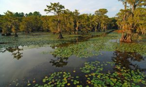 Airboats, Alligators and a Rich History in Louisiana