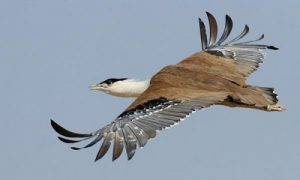 Indian Bird Conservation Underway