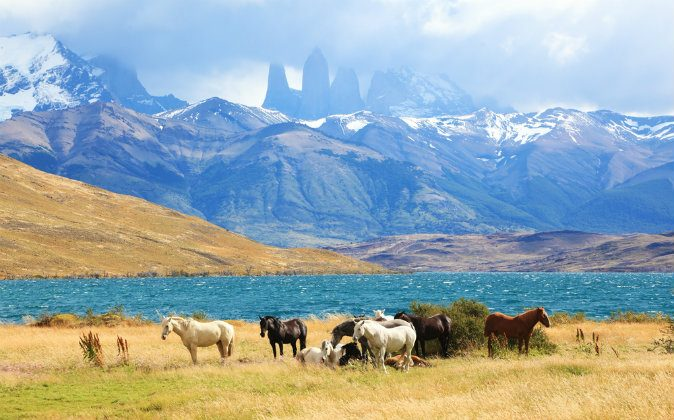 Park Torres del Paine in Chile via Shutterstock*