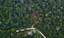 Deforestation Threatens Forest Dependent People Too