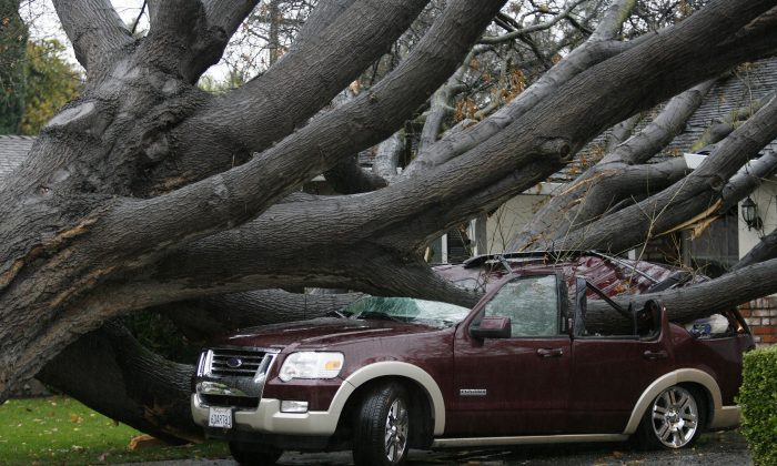 An SUV is crushed by a large oak tree during a storm  in San Jose, Calif., on Thursday, Dec. 11, 2014. No injuries were reported.  A powerful storm churned through Northern California Thursday, knocking out power to tens of thousands and delaying commuters while soaking the region with much-needed rain. (AP Photo/Bay Area News Group, Gary Reyes)