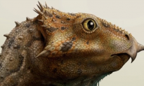 Oldest Horned Dinosaur Species Found in US (Video)