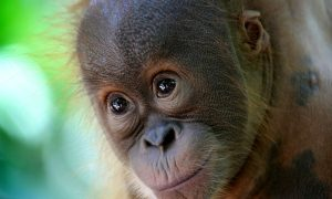 EU Adopts Law Mandating Palm Oil Labeling on Food Products