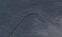 Google Earth May Have Discovered a Mystery Creature (Video)